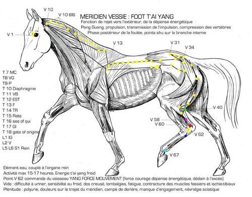 Grammage couverture pour cheval tondu MERIDIEN_VESSIE_copie-594fa